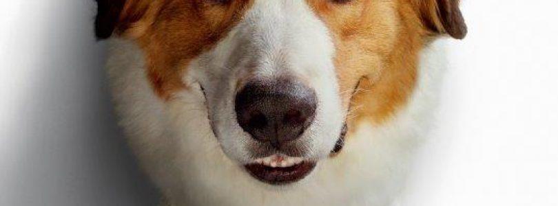 """,,Câinele, adevăratul meu prieten 2"""" așteaptă iubitorii de animale în cinematografe din 21 iunie"""